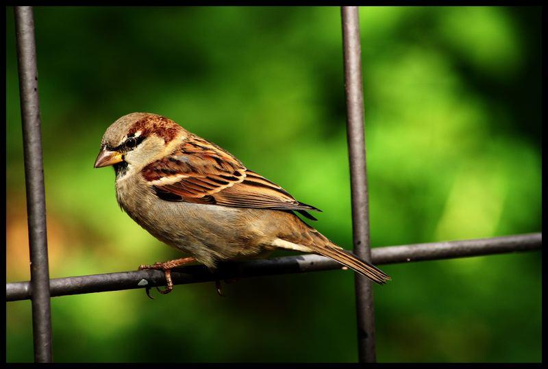 da is ja das vögele :-)