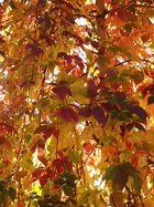 Da ist Er wieder der schöne Bunte Herbst !