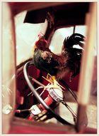 Da ist ja schon wieder das verrückte Huhn!