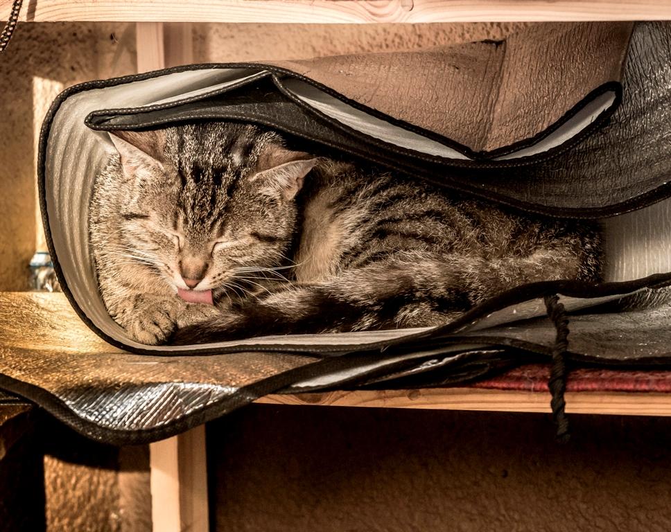 Da krabbelt Susi oft rein - ihr Schlafplatz
