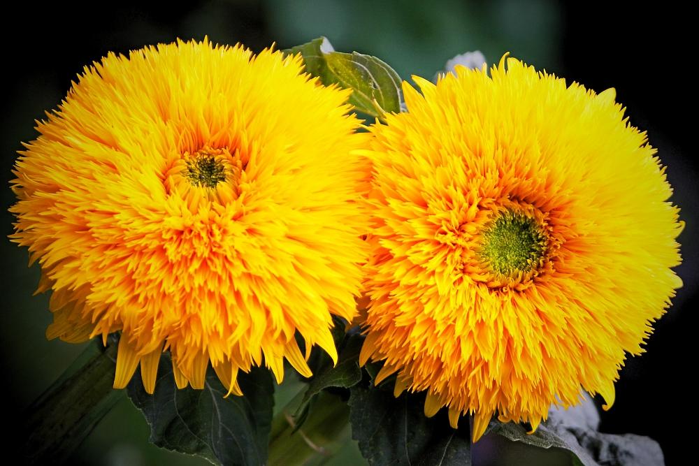 da lacht die Sonne in unsere Herzen....