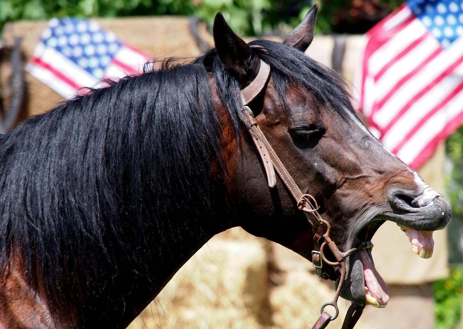 Da lacht ja das Pferd!
