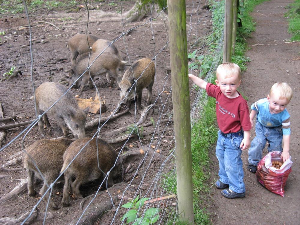 Da sind die Wildschweine, Papa!