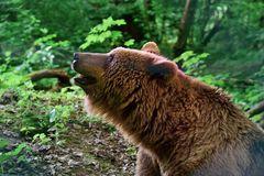 Da staunt der Bär