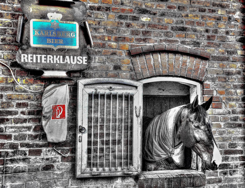 Da steht ein Pferd am Fenster
