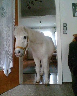 Da steht ein Pferd auf dem Flur*singz*