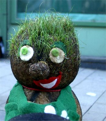 Da wächst mir doch Gras auf dem Kopf