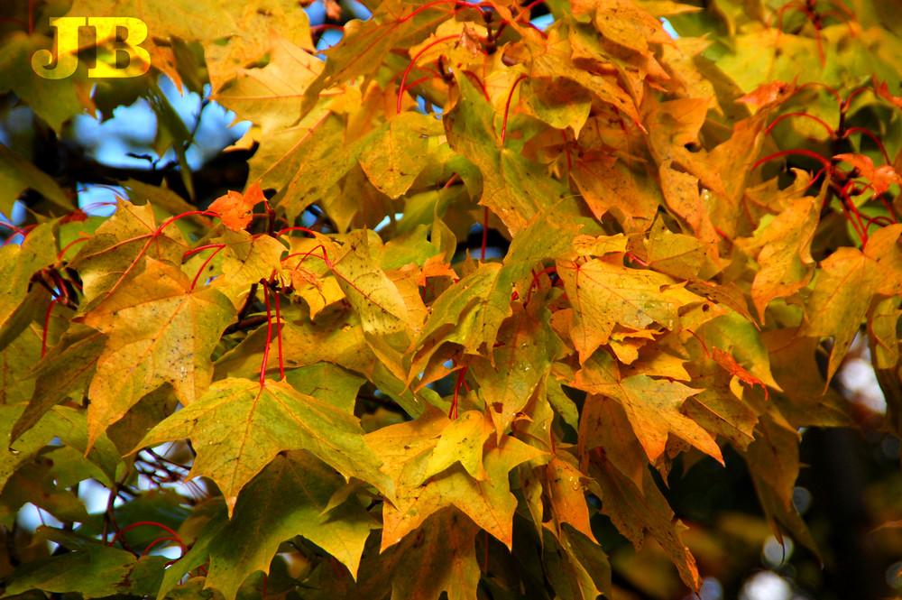 Da war es noch Herbst!
