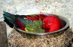 """Da wird doch das """"Huhn"""", in der Pfanne verrückt....sprach der Papagei"""