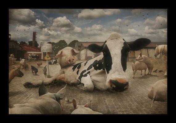Da, wo Kuh Urlaub macht.