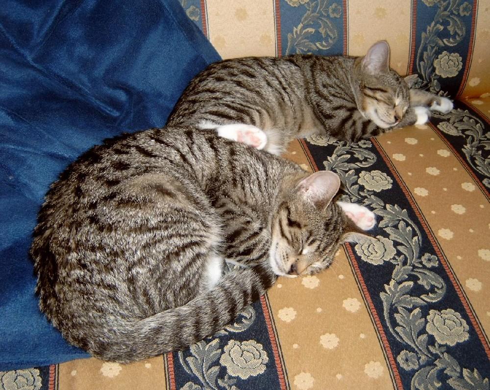 Da wurde auch noch zusammen geschlafen