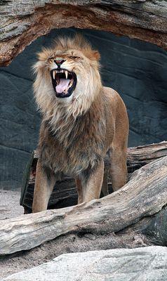Da zeigt er seine Zähne