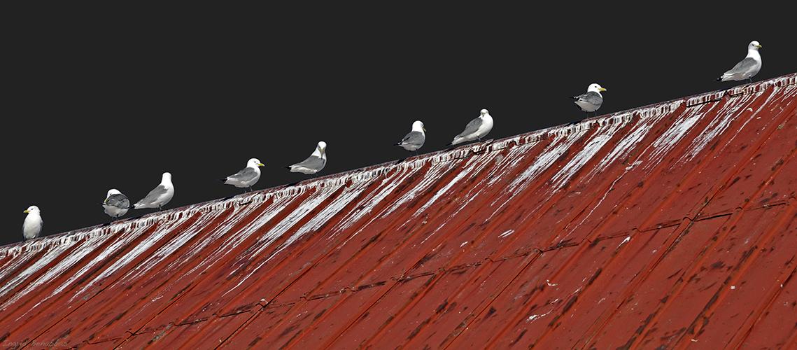 Dach, bescheiden