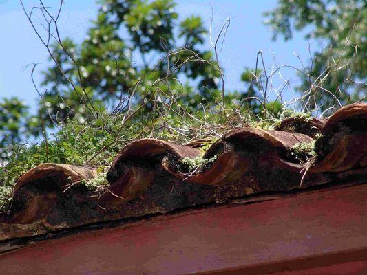 Dachbegrünung auf Kuba
