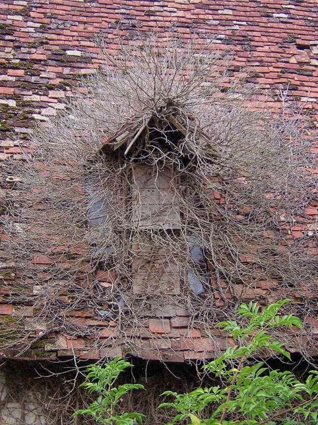 """Dachfenster mit poppiger """"Frisur"""""""