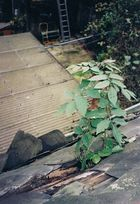 Dachgarten... - Jardin suspendu...
