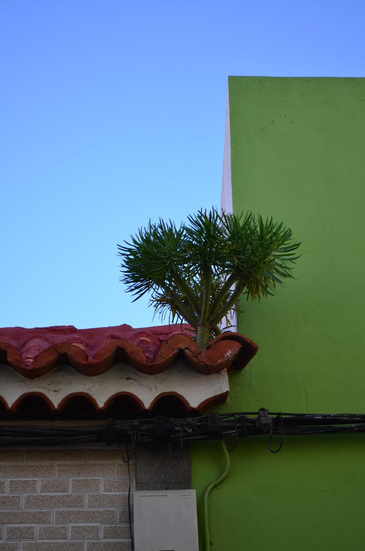 Dachgewächse