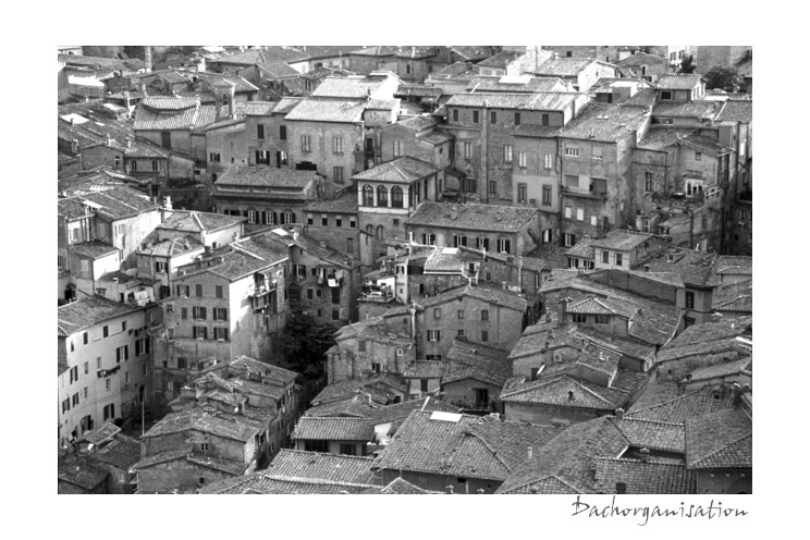 Dachorganisation (Siena, Toscana, Italien)