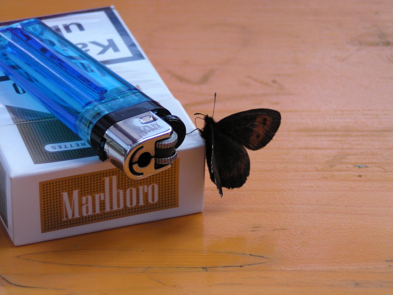 Dachte Schmetterlinge rauchen nicht -
