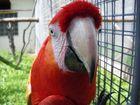 Dämliches Papageienviech