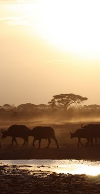 Dämmerung im Amboseli