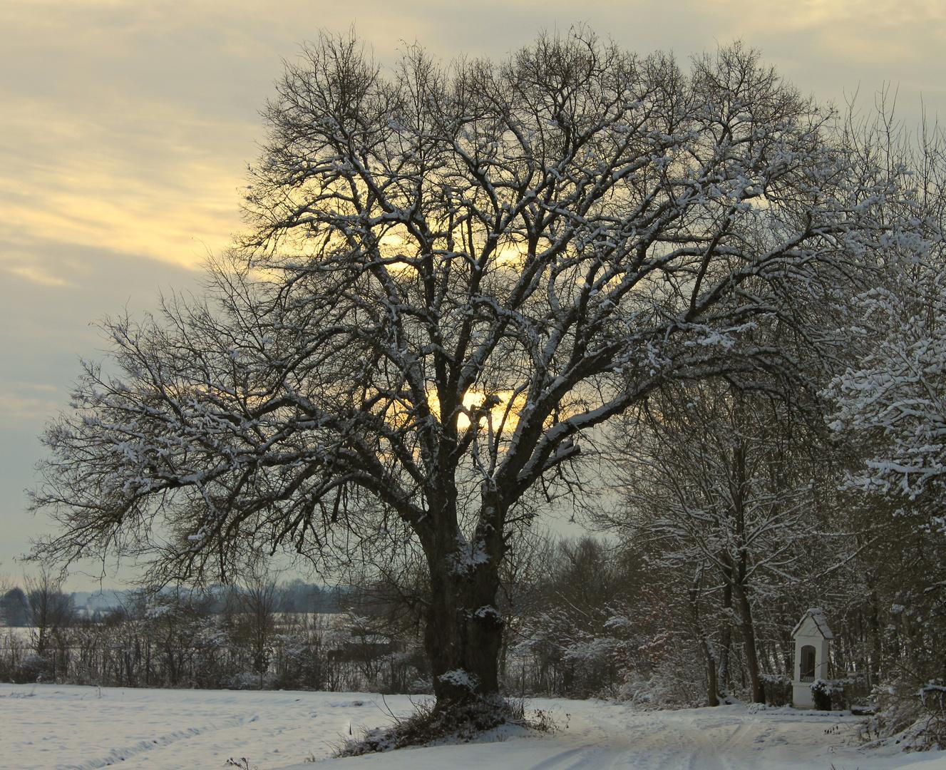 Dämmerung im Schnee