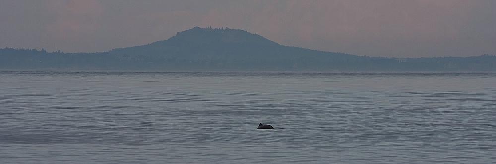Dämmerung mit Wal