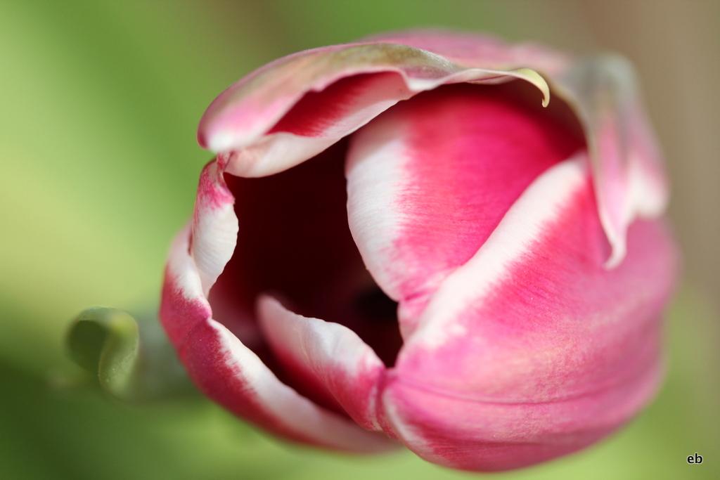 ...dafür liebe ich den Frühling...