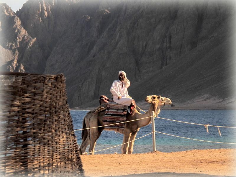Dahab South Sinai....Das Kamel mit zwei Köpfen