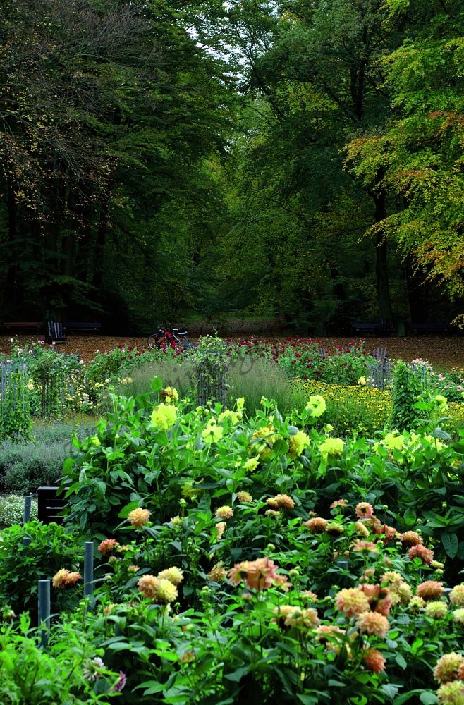 Dahliengarten Hamburg die dritte...