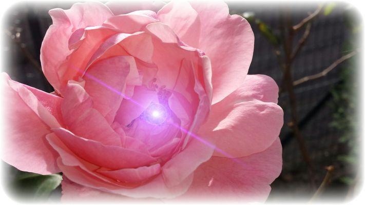 Dai diamanti non nasce niente, dal letame nascono i fior. Cit.
