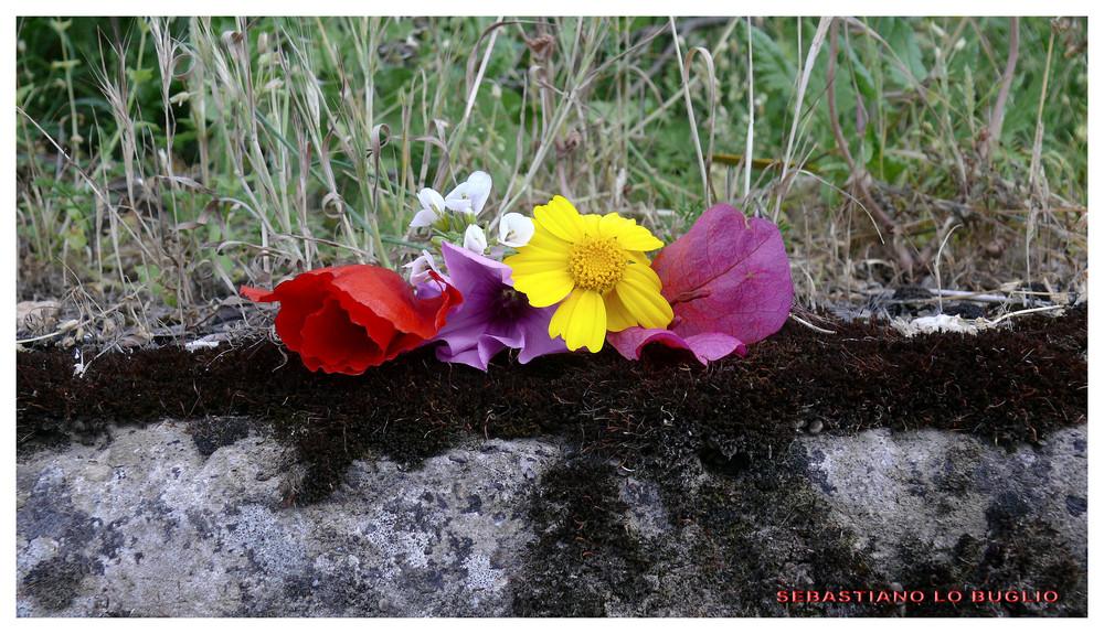 Dai diamanti non nasce niente, dal letame nascono i fiori