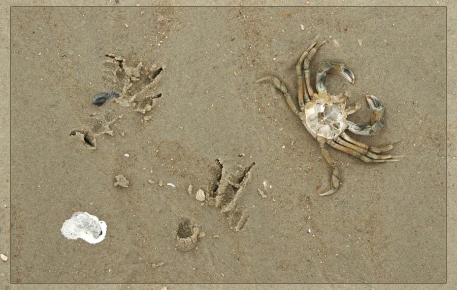 daily beach massacre