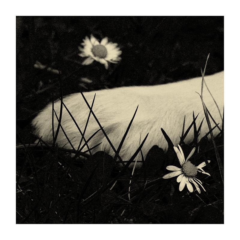 ~daisy~