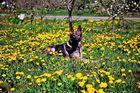 Daisy von den kleinen Kiebitzen