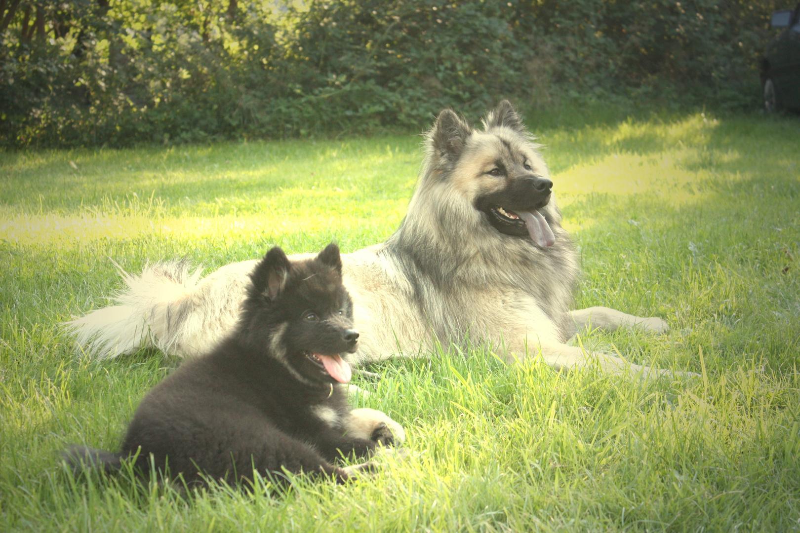 Dakimo und Ben
