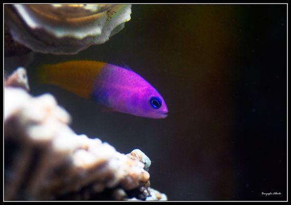 dal mio aquario