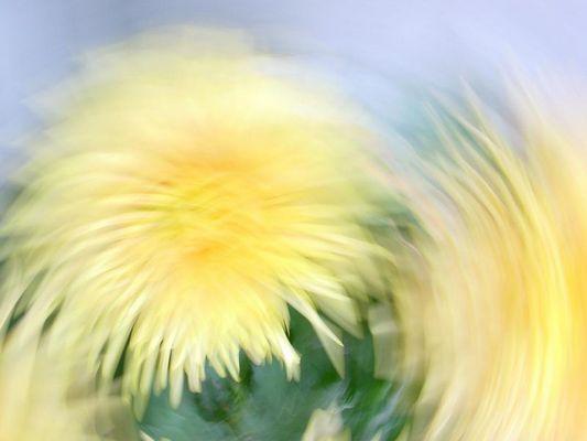 Dalie Aquarell - Weich und fliessend