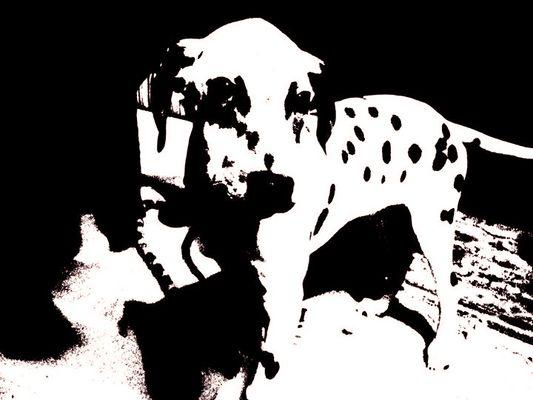 Dalmatien en noir est blanc ;)