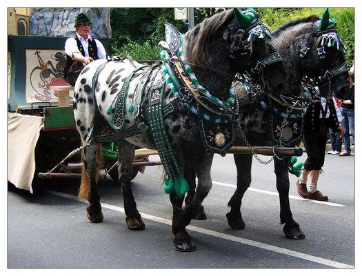 Dalmatiner-Pferde:-)