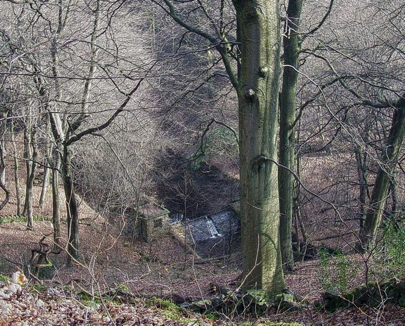 Dam below the tree's