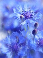 Dame in Blau