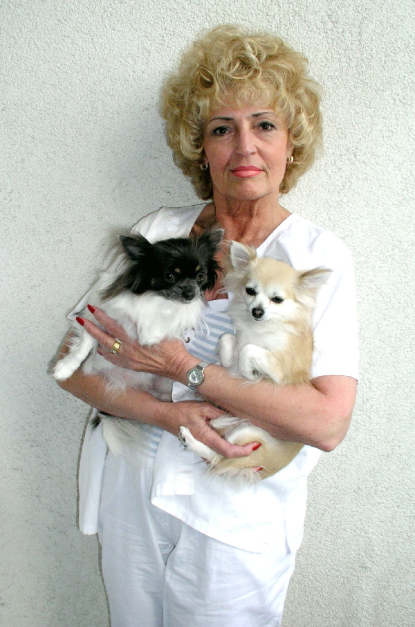 Dame mit Chihuahuas