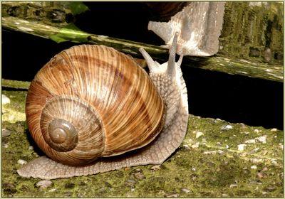 Snails & Slugs