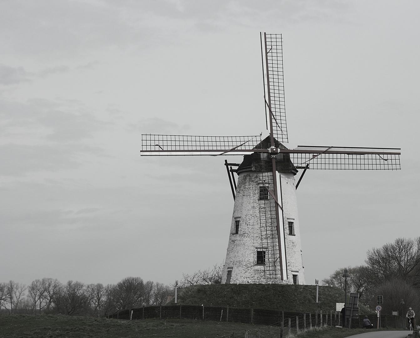 Damme - Windmühle