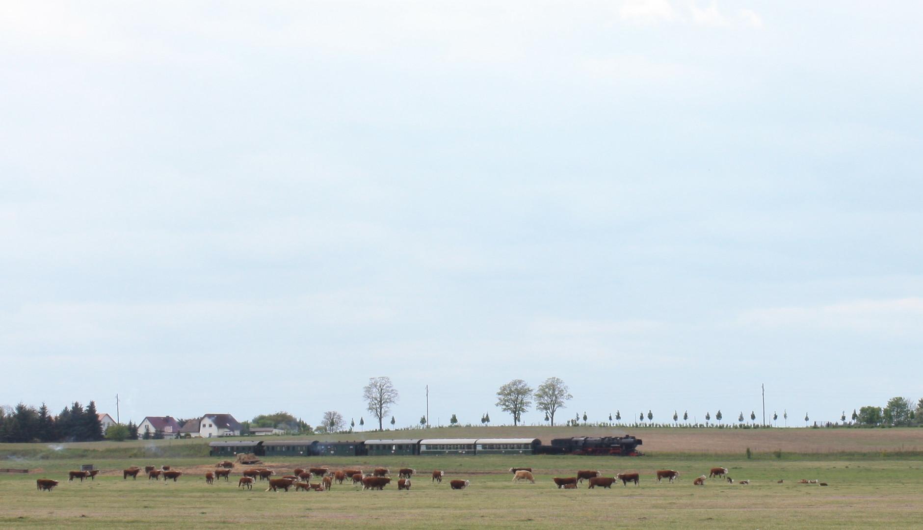 Dampflok 52 8177 bei Hammelspring/Uckermark