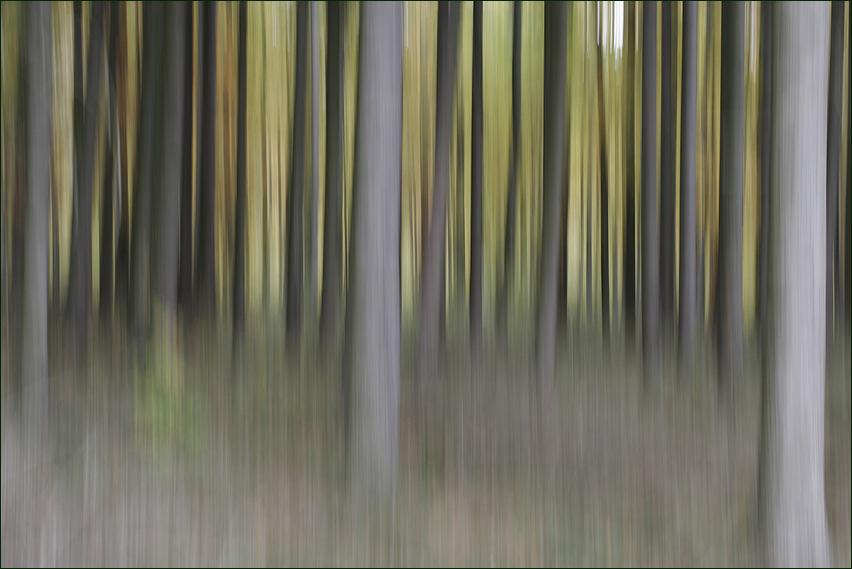 dance wood