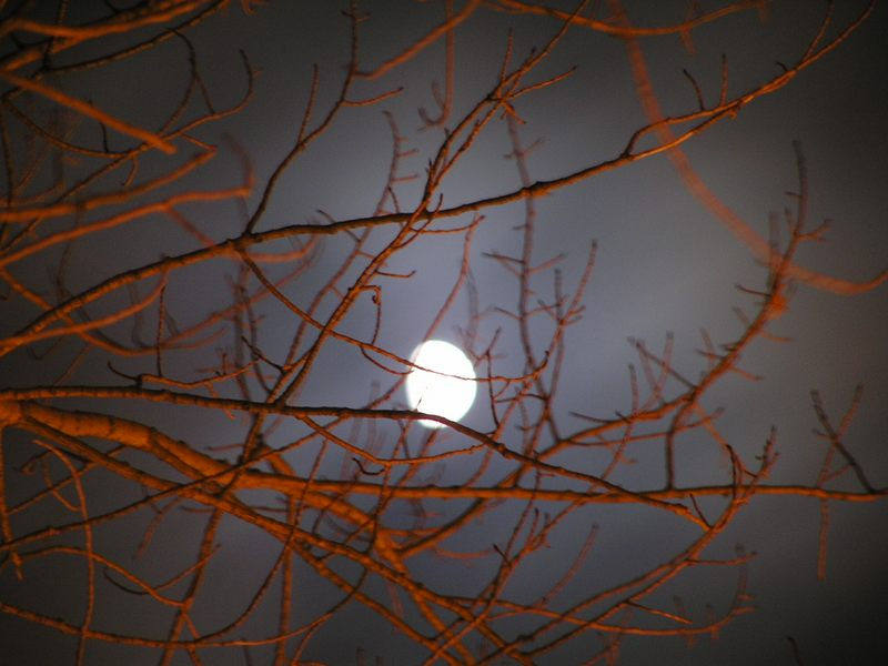 dancing in the moonlight....