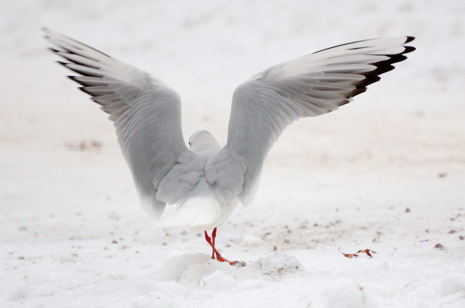 Dancing in the snow.