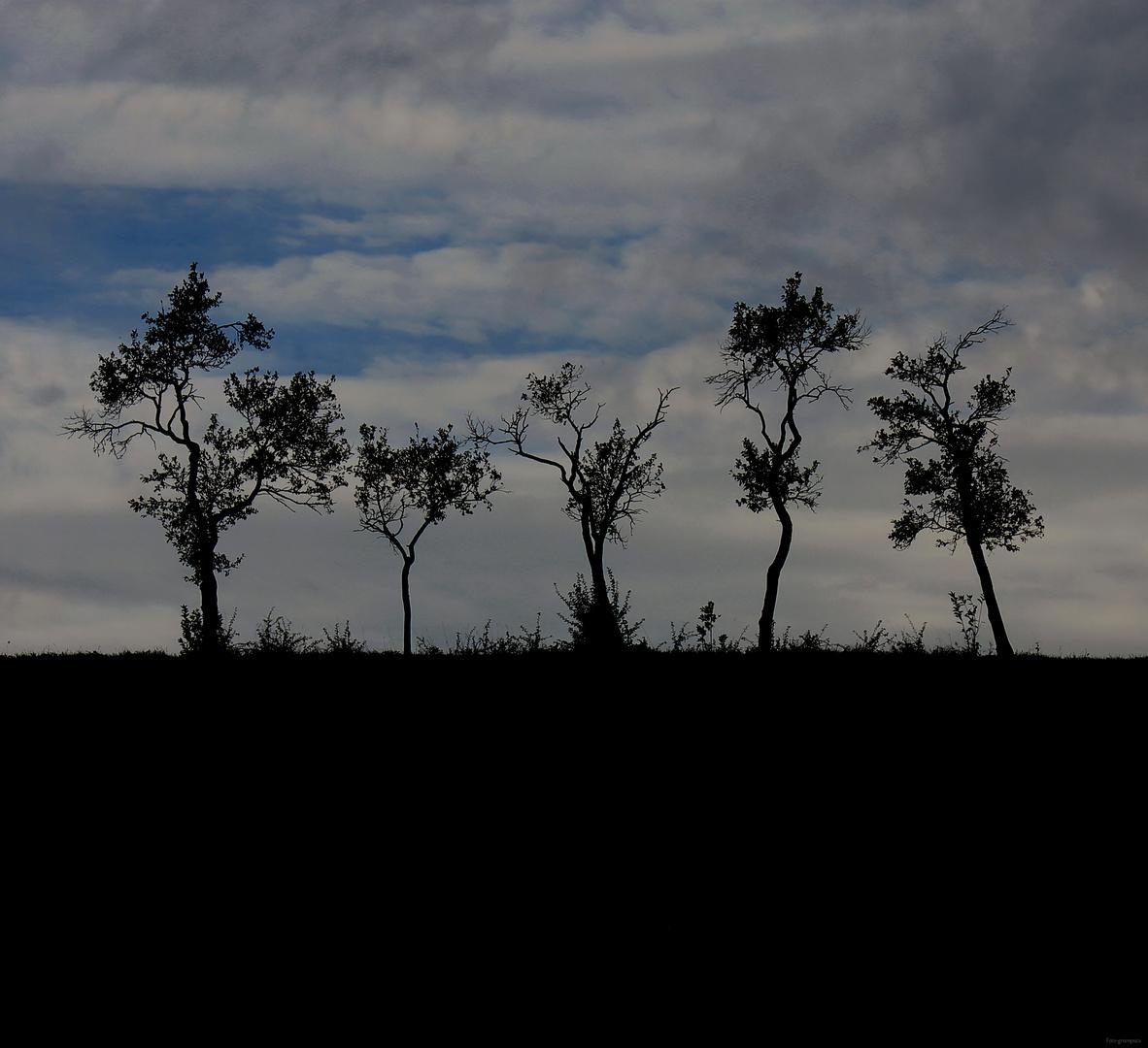 ***dancing trees***